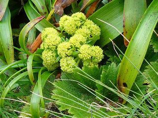 Polaris.plant