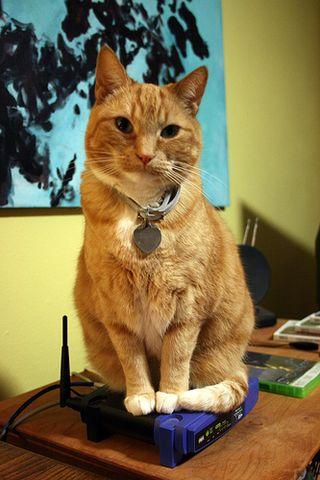 Cat.on.modem